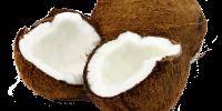 Propriedades-manteiga-e-óleo-de-coco-nos-cabelos